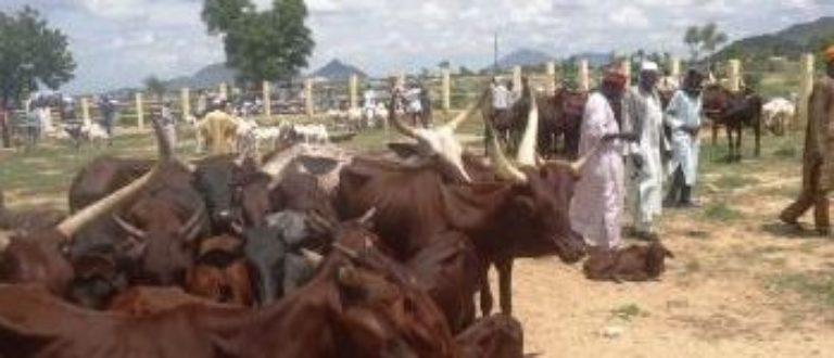 Article : Mora, marché à bétail de l'espoir