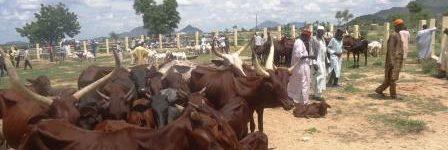 Le marché à bétail de Mora