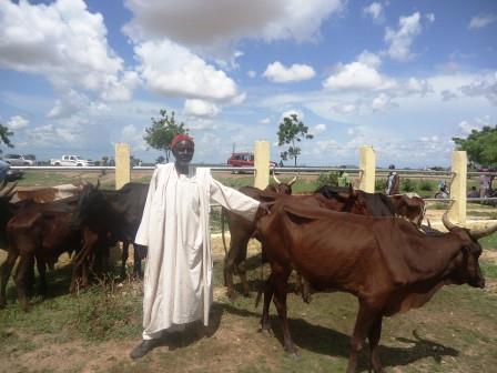 Un homme en boubou blanc pose la main sur un bœuf marron dans un enclos.