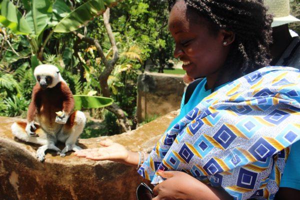 Lémurien qui mange au zoo
