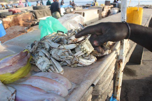 Des crabes et de la sole à vendre sur un étal